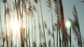 Personal Work : Reeds, Short Film