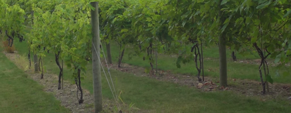 wineries tourism film nh video production